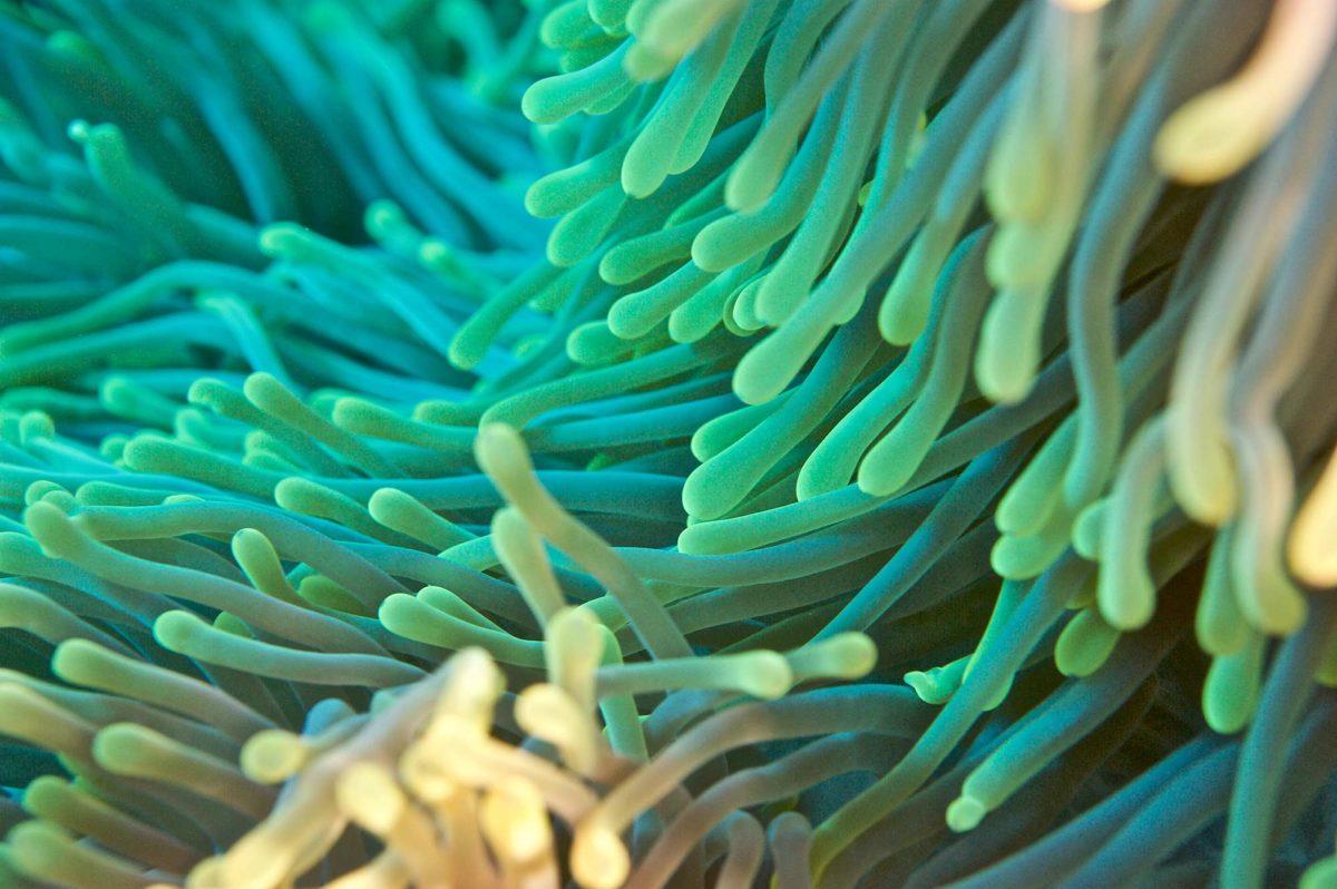 17_Coral-Colors