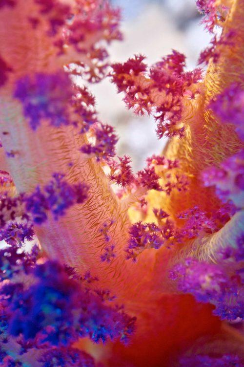 1_Coral-Colors
