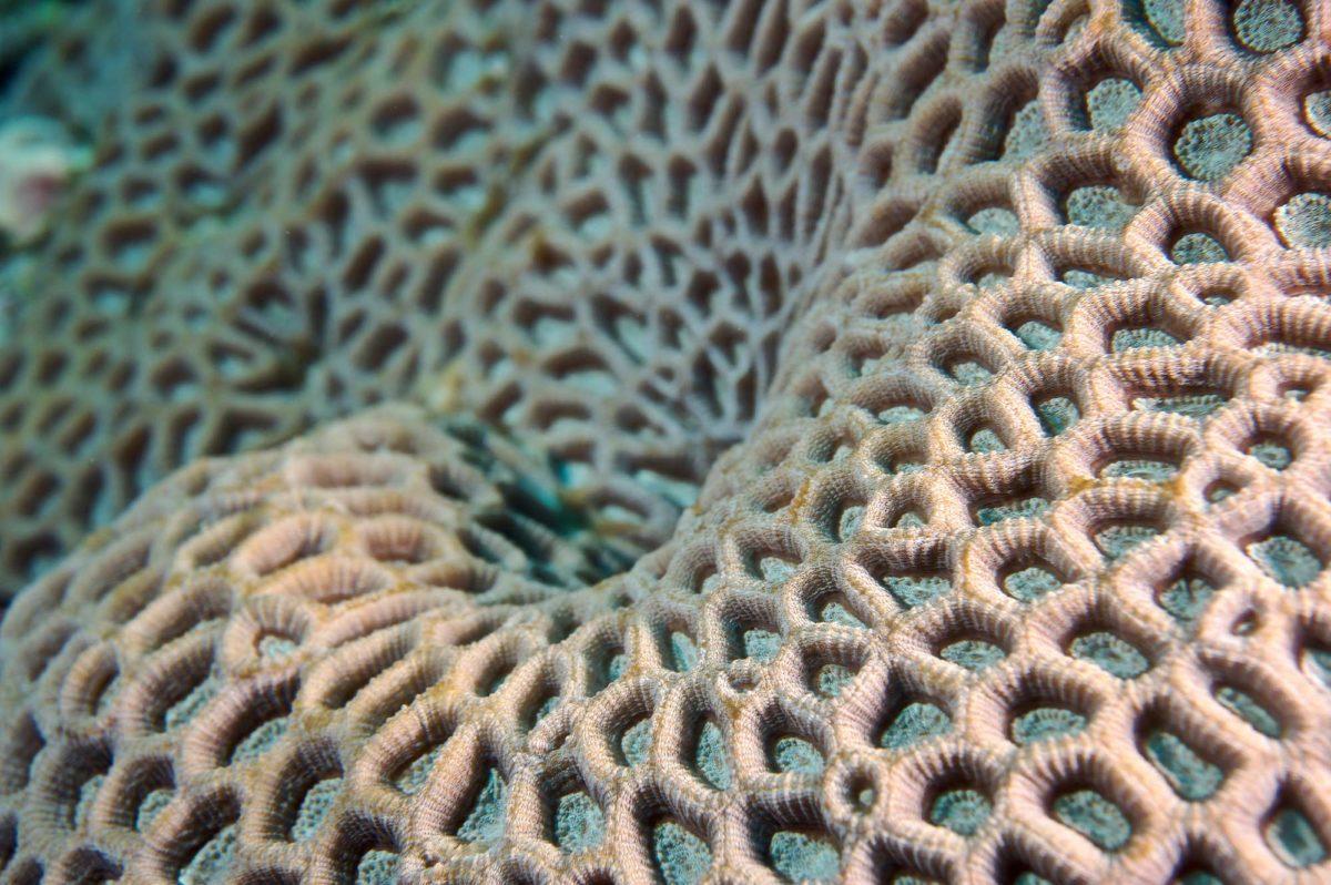 25_Coral-Colors
