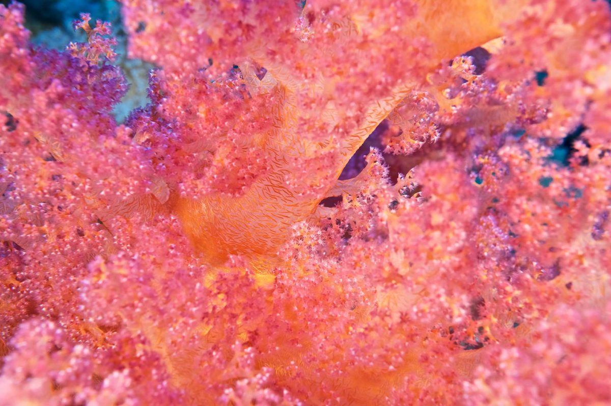 9_Coral-Colors